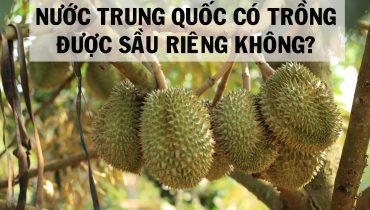 Nước Trung Quốc có trồng được sầu riêng không?